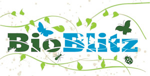 bioblitz_logo_reduced